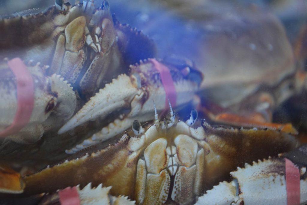 Crab at Kuzma's Fish